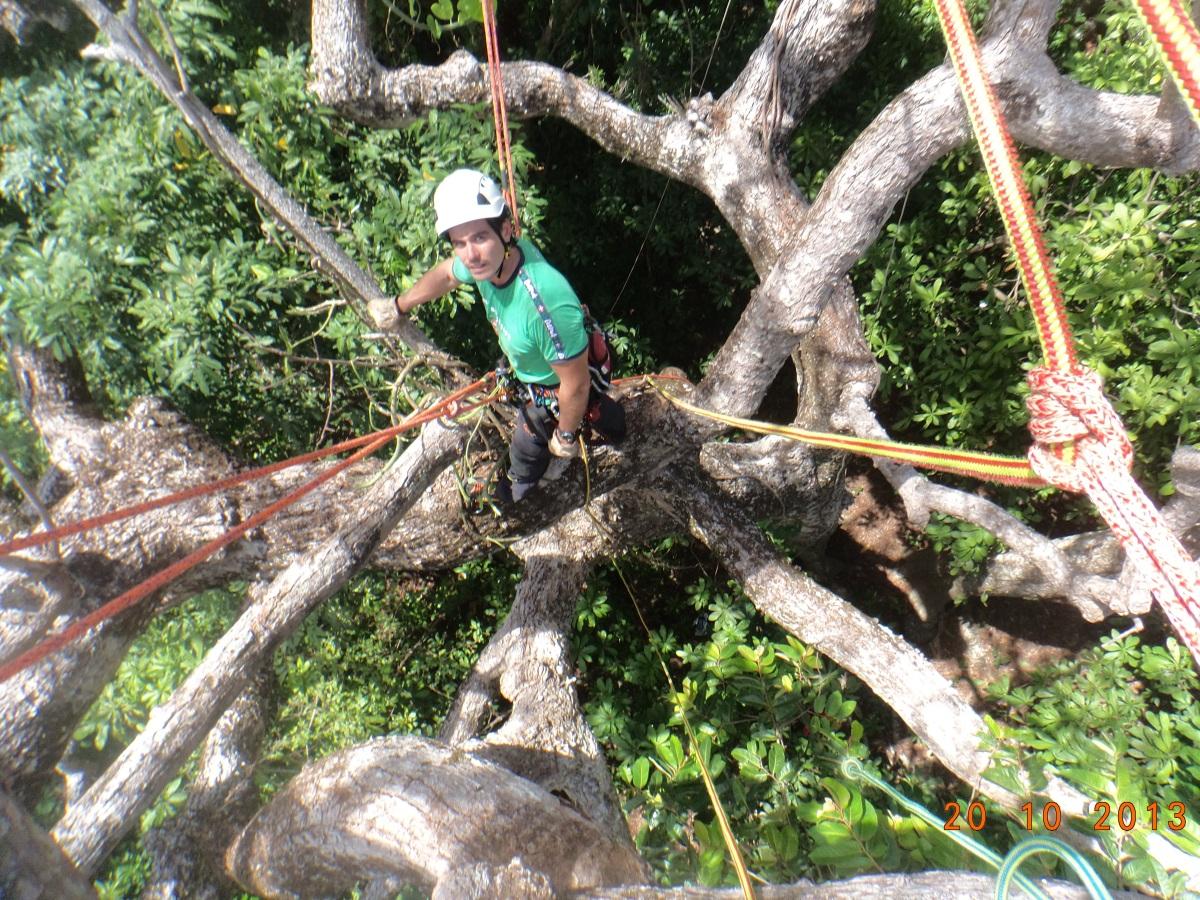 Pouvoir se d placer dans toute la couronne de l arbre et for Reglementation elagage des arbres
