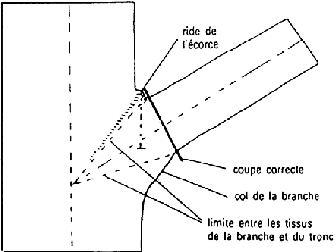 insertion branche tronc