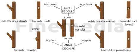 plan-angle-de-coupe2-main-4381100