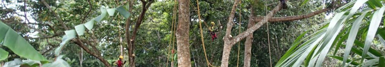 Elagage / Cayenne / ELAGUYANE / Un artisan pour vos arbres